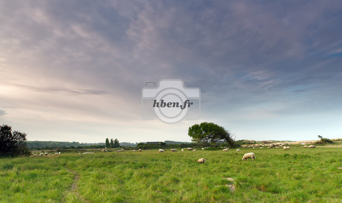 """Salt meadows in Cotentin"" stock image"