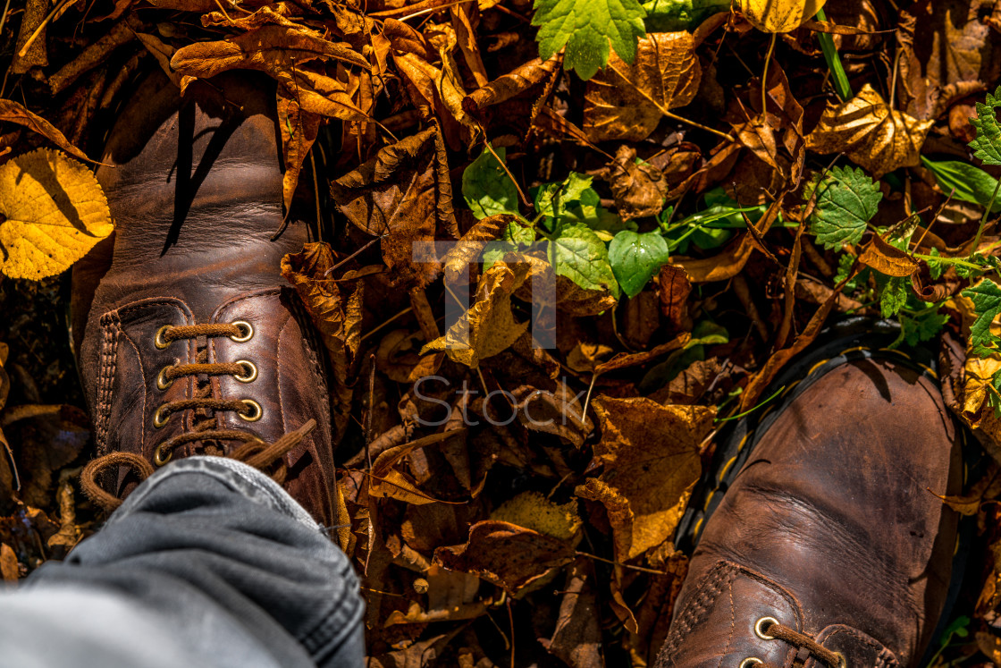 """Autumn season concept in rural Biesbosch"" stock image"