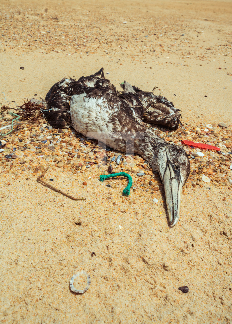 """Dead seagull on beach 3"" stock image"