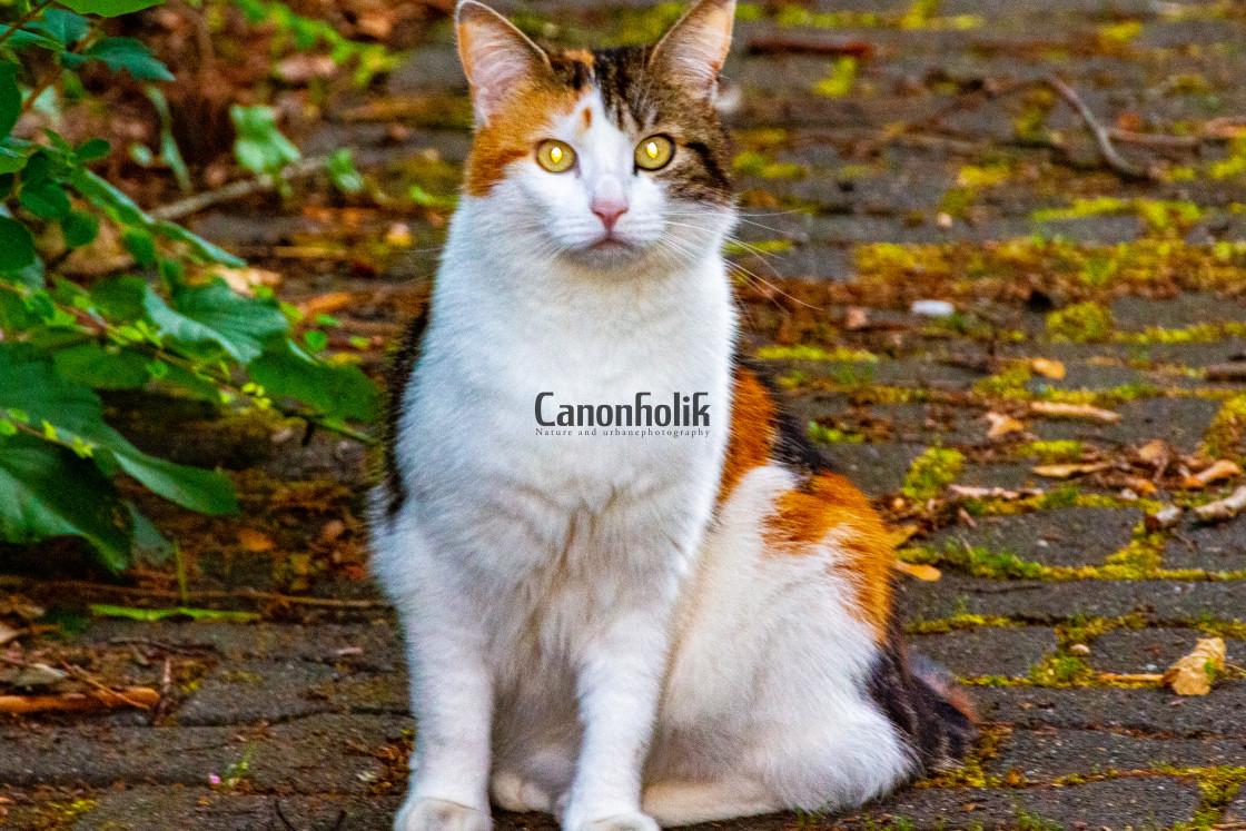 """""""Lovely cat"""" stock image"""