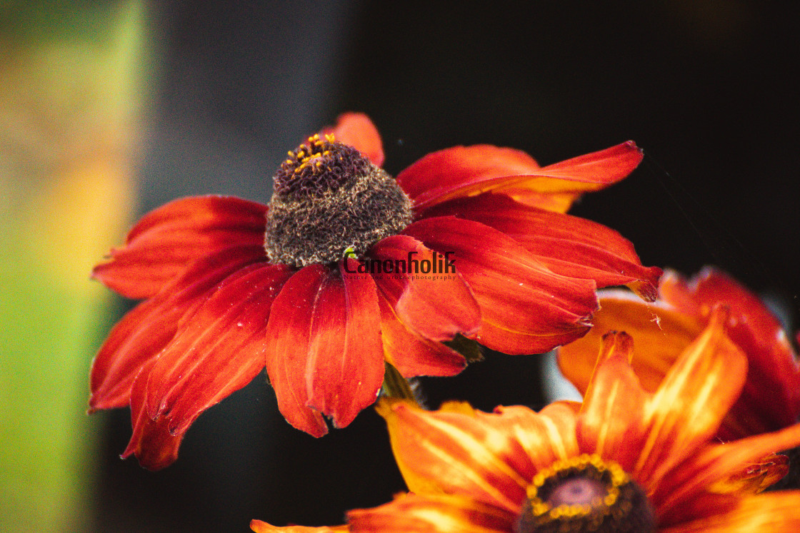 """Flowers in autumn"" stock image"
