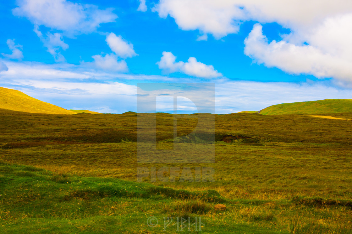 """""""meadow"""" stock image"""