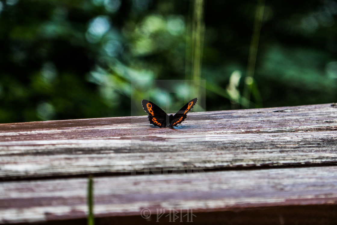 """butterfly 2"" stock image"