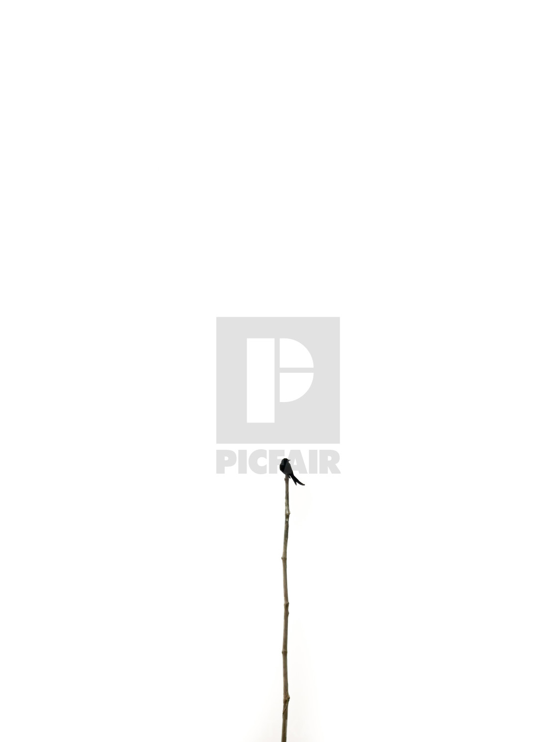 """lonely bird sitting on the pole"" stock image"