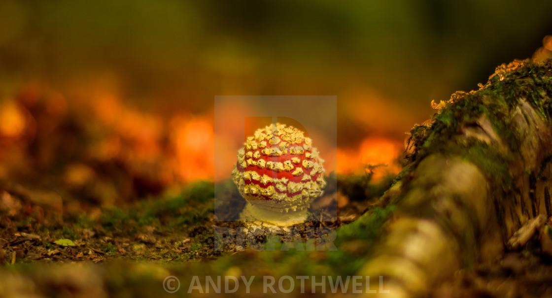 """Autumn's arrival"" stock image"