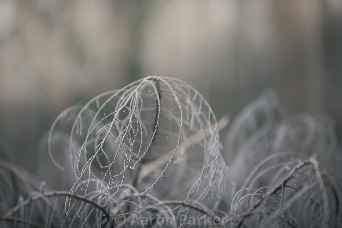 """""""Frosted Fallen Tree Branch"""" stock image"""