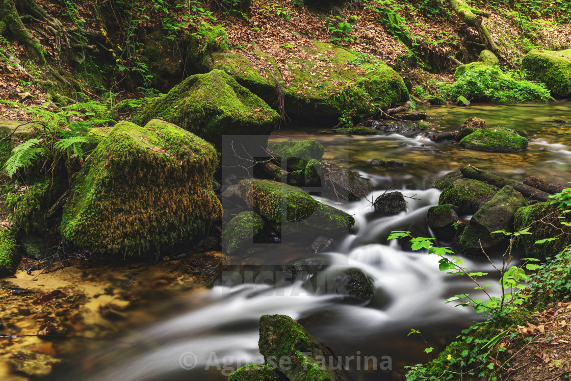 """Luxembourg forest"" stock image"