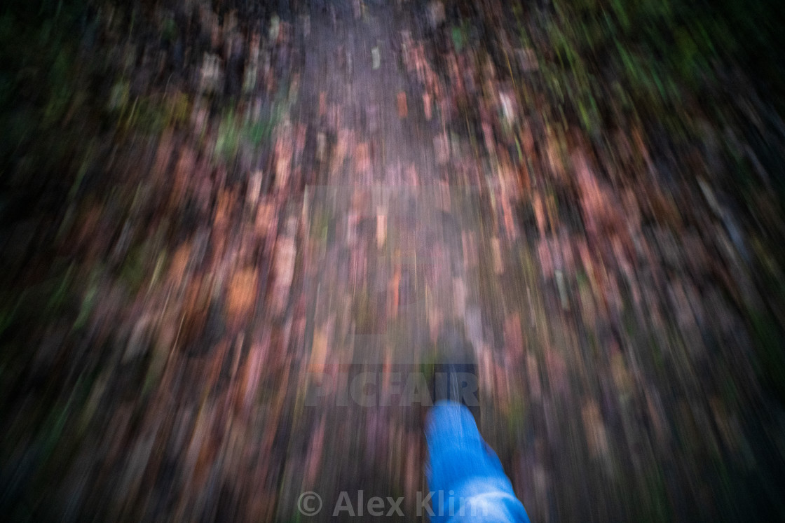 """""""Forest Walk Motion"""" stock image"""