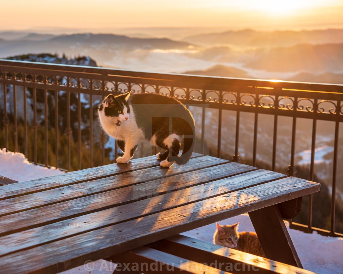 """Cats at sunrise"" stock image"