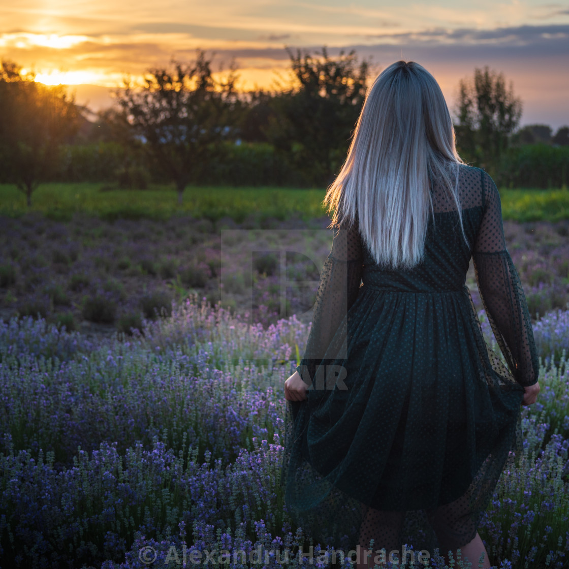 """""""Girl running in a lavender field"""" stock image"""