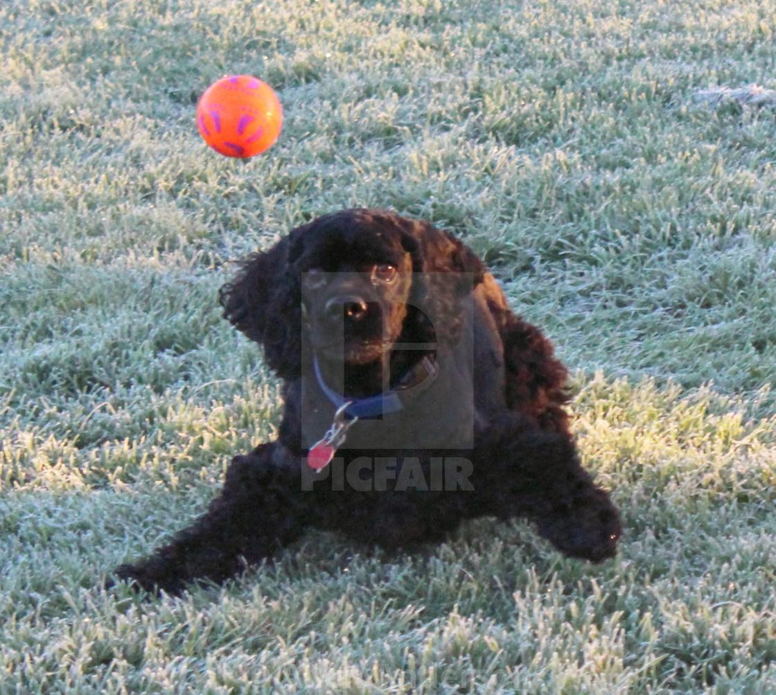 """""""Dog & Ball"""" stock image"""