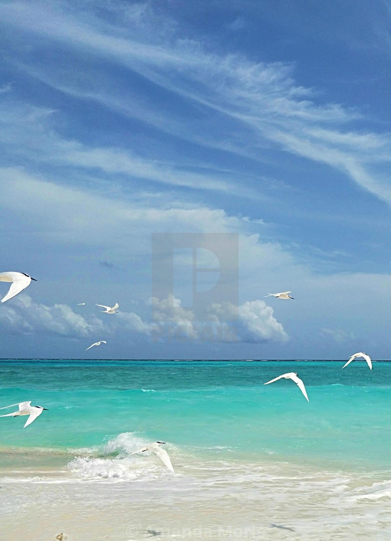 """White Birds"" stock image"