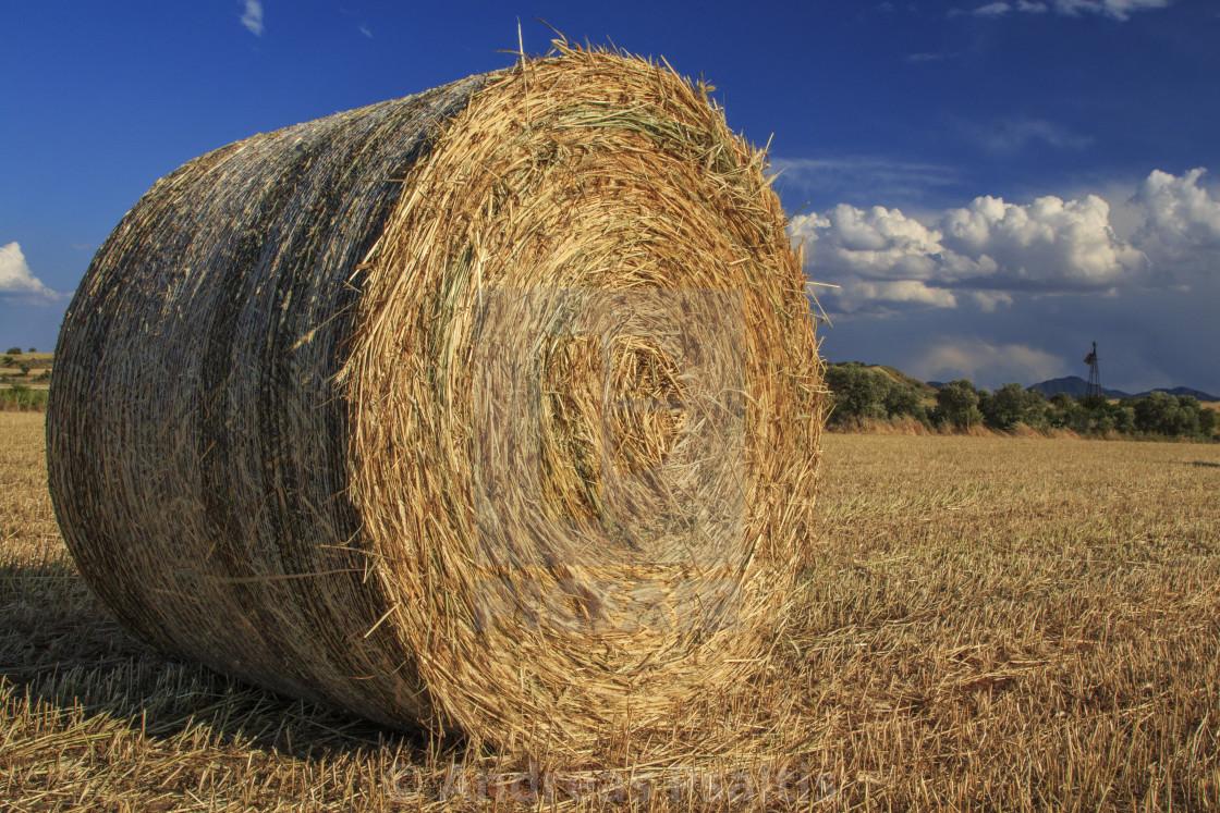 """""""Wild Hay Bales On Autumn"""" stock image"""