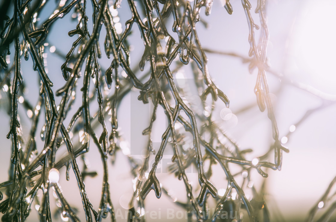 """Freezing tree branches close up against the sunlight. Winter concept."" stock image"