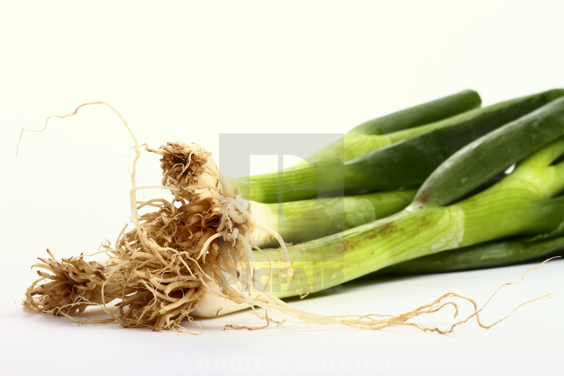 """Bunch of spring green onions isolated on a white background"" stock image"