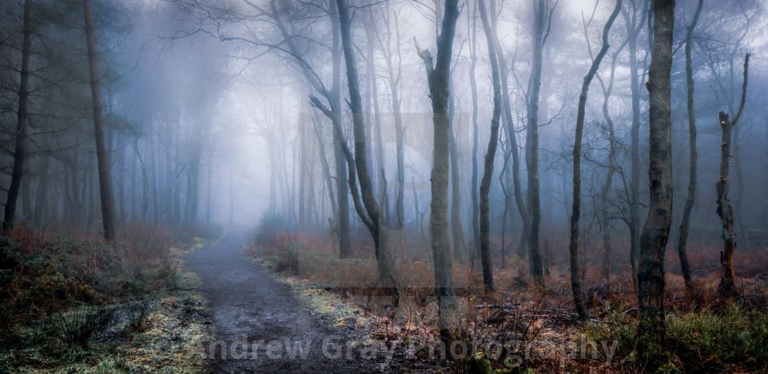 """""""Misty Woodland"""" stock image"""