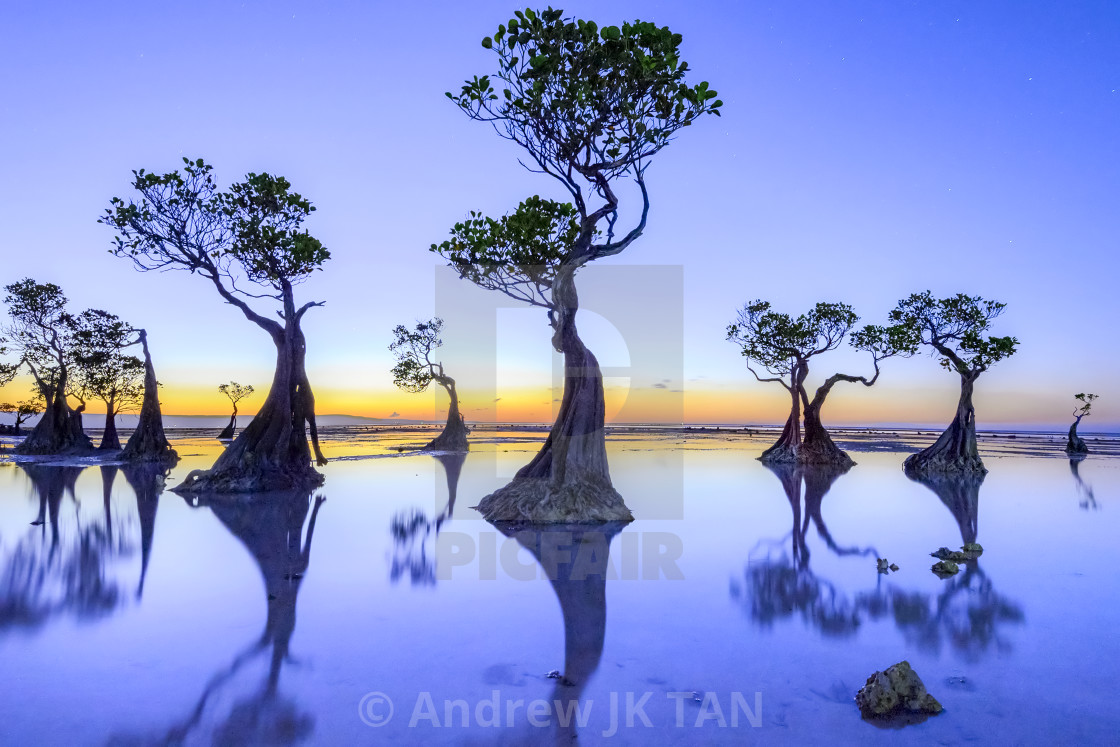 """Dancing Trees 02"" stock image"