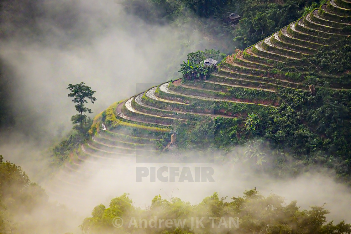 """Ban Phung Rice Terraces 02"" stock image"