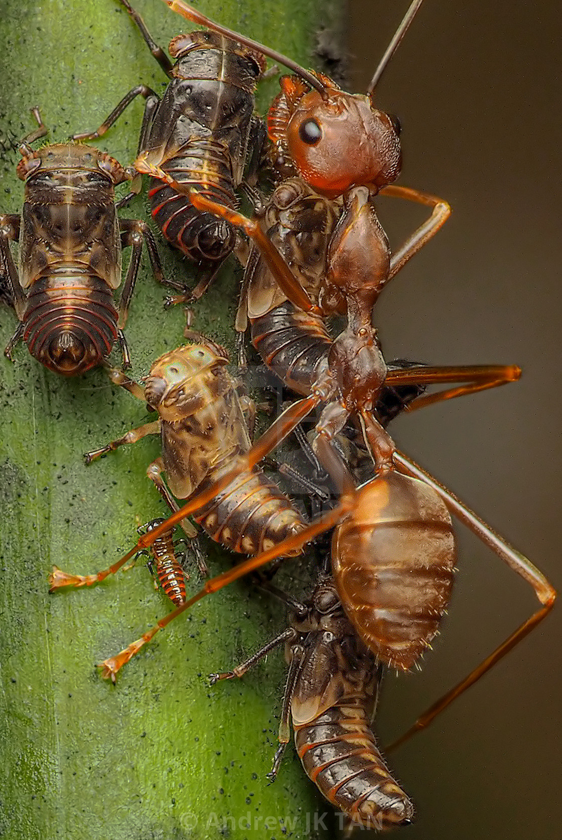 """Ants & Aphids 01"" stock image"