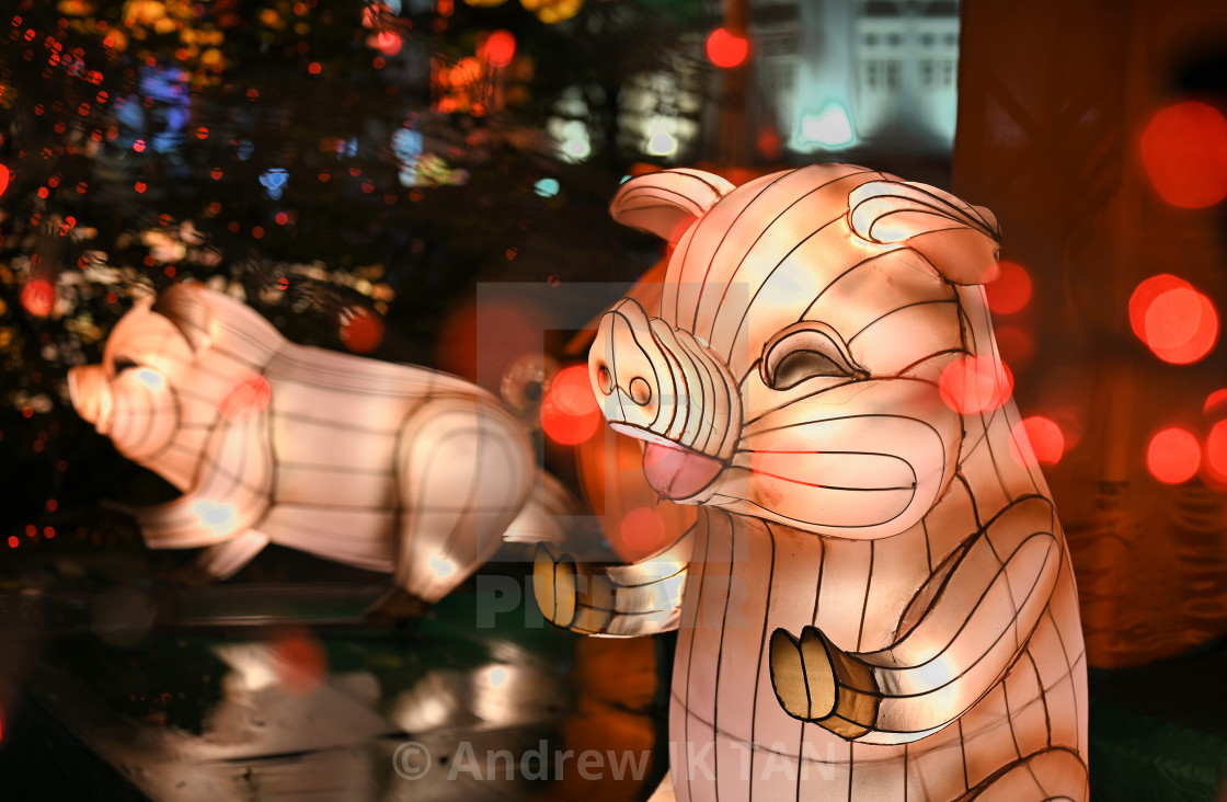"""Year of the Pig 01"" stock image"
