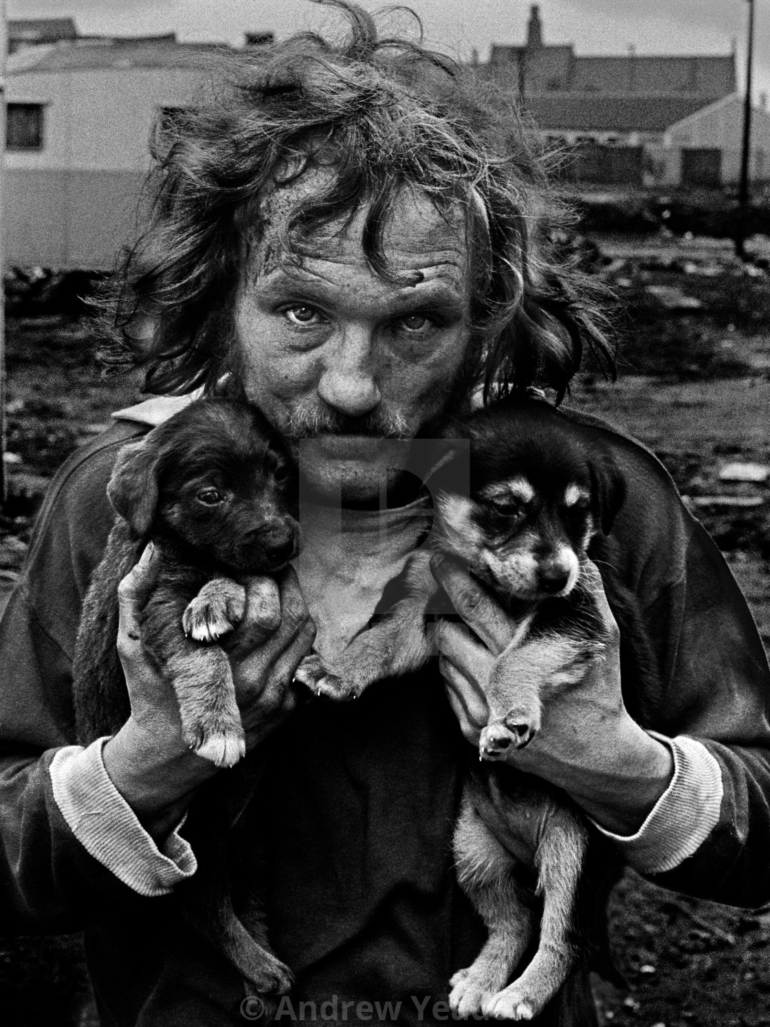 """Me and My Dogs - Gypsy in Bradford"" stock image"