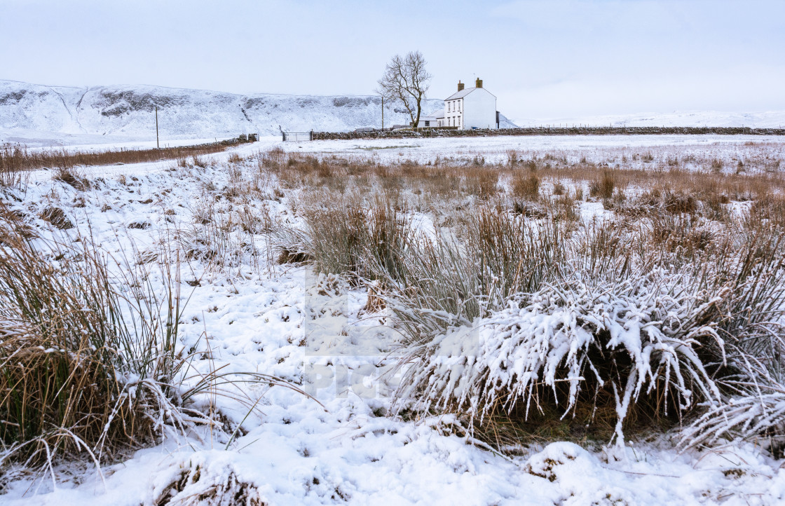 """""""Fresh snow, Forest in Teesdale"""" stock image"""