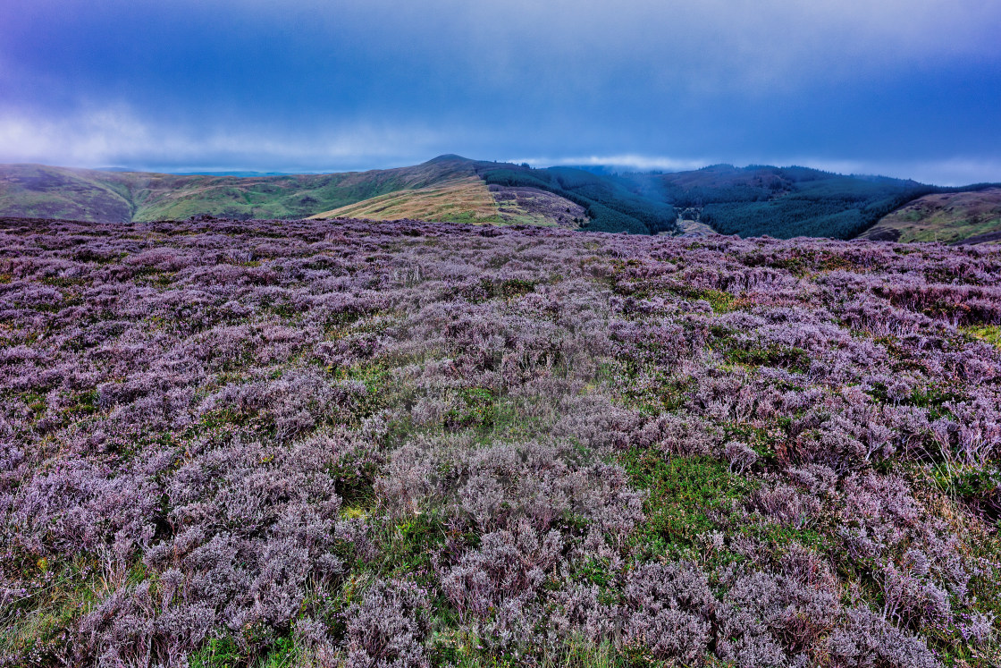 """""""Lords Seat from Whinlatter"""" stock image"""