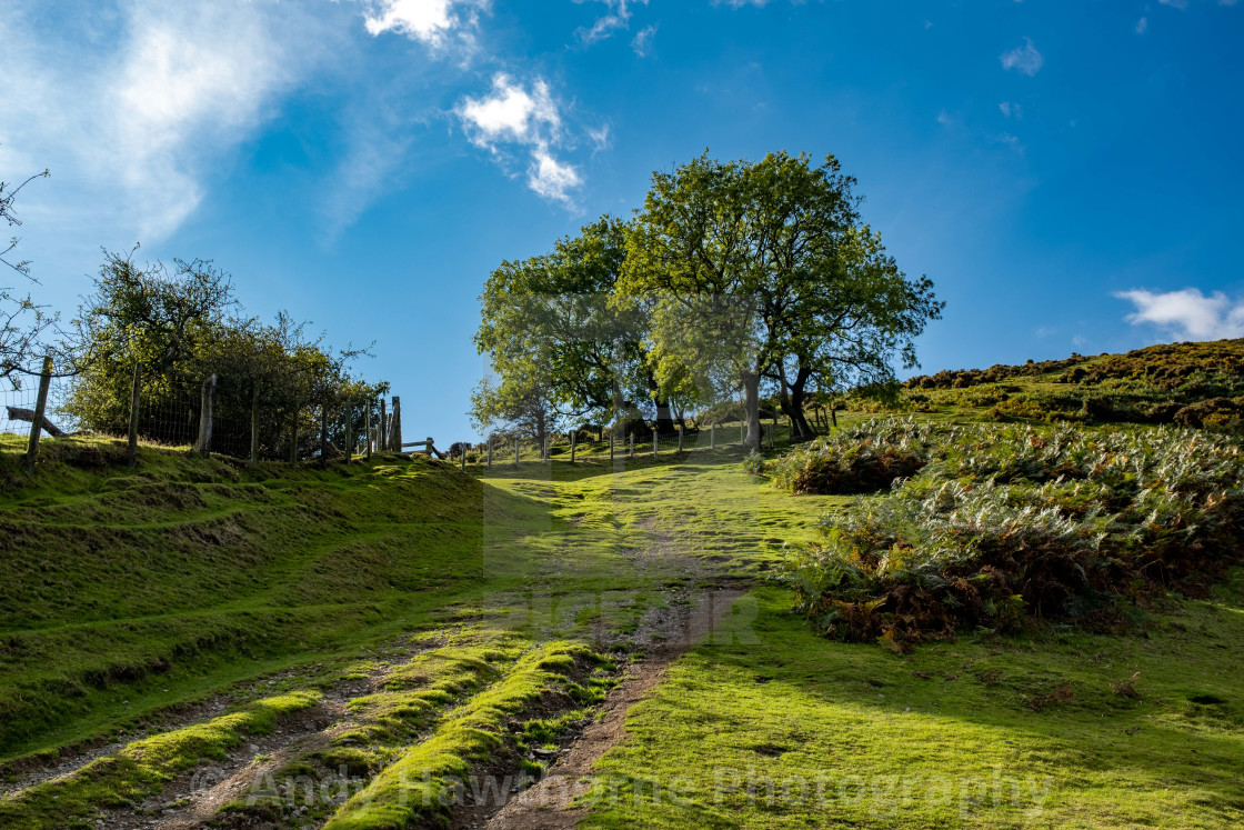 """""""Along the cart track"""" stock image"""