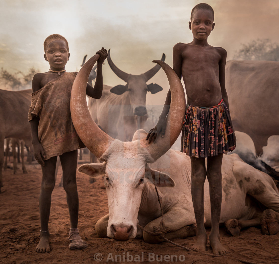 """Young mundari taking care of the cattle"" stock image"