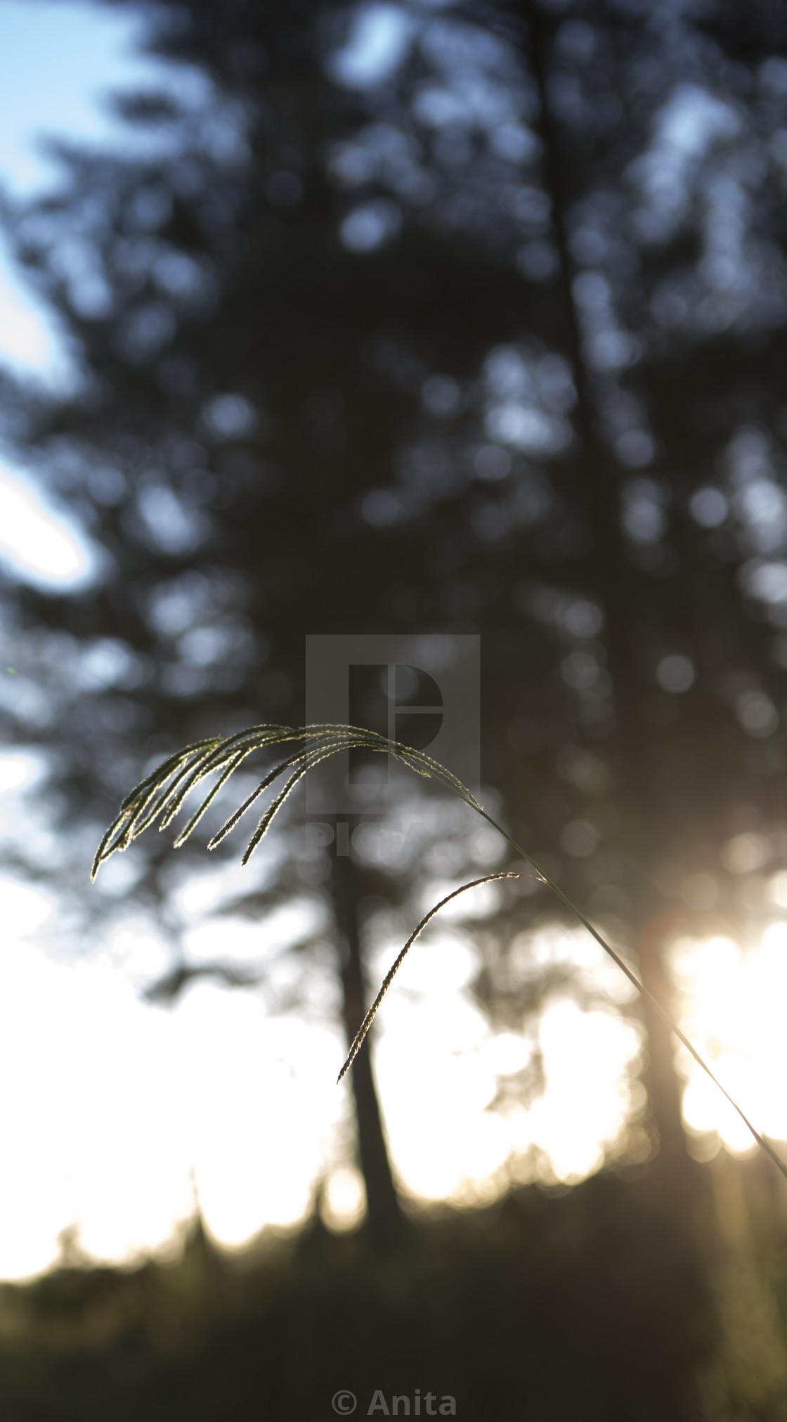 """""""Forest grass"""" stock image"""