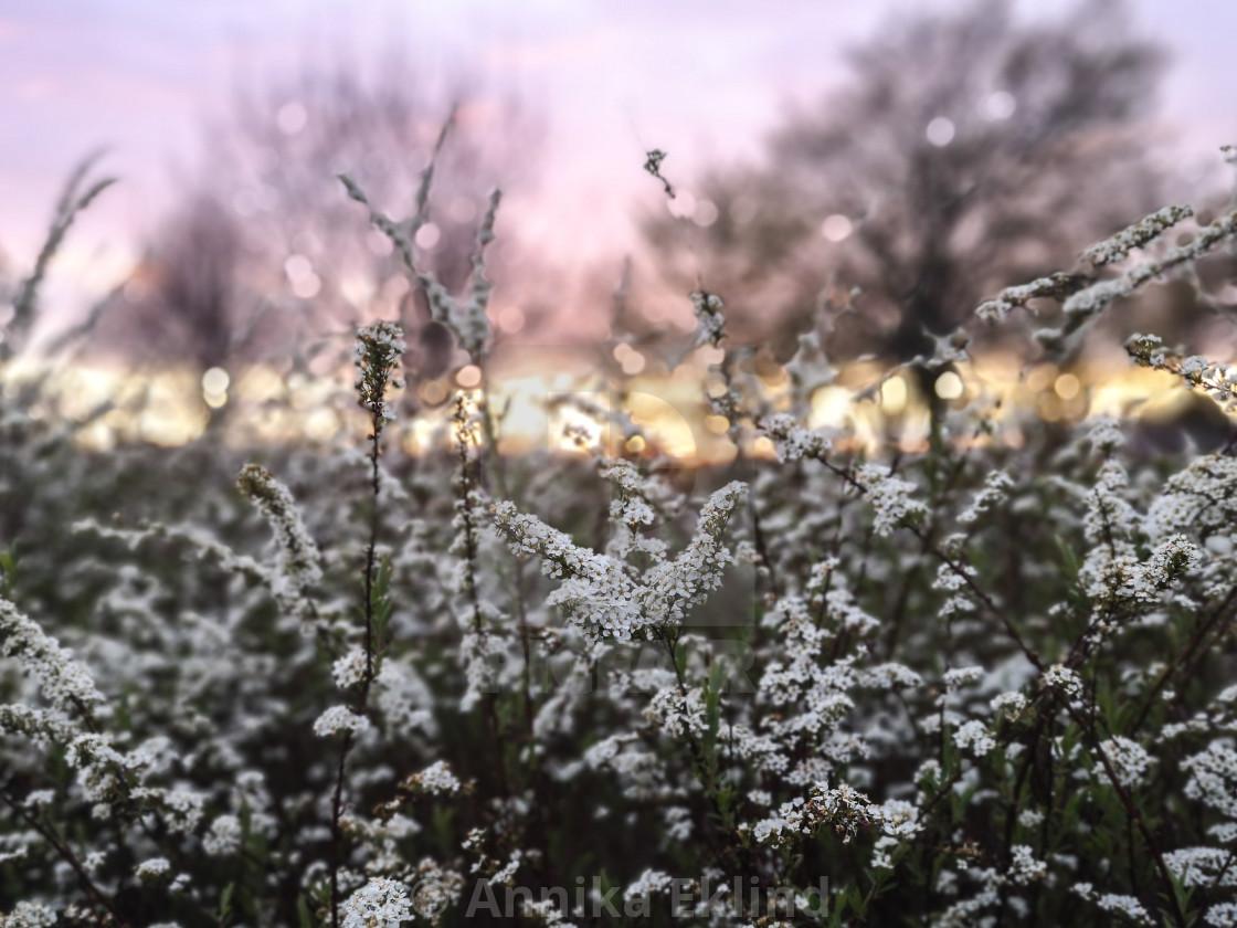 """Springtime evening"" stock image"