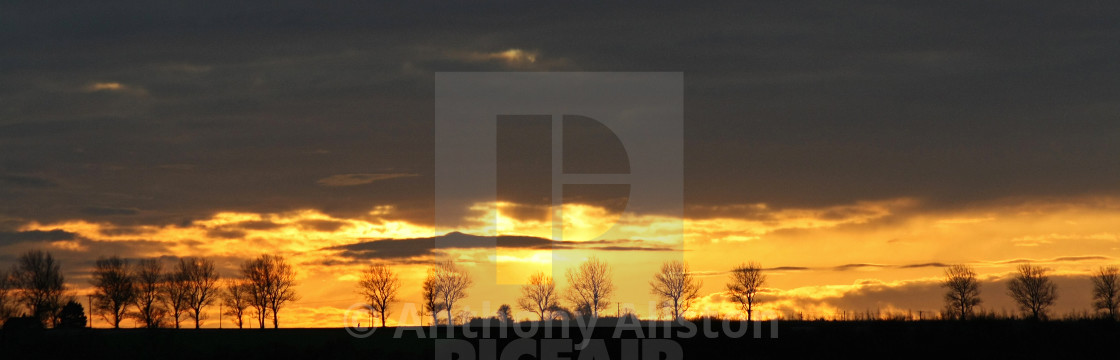 """""""Trees in silhouette at sunset"""" stock image"""