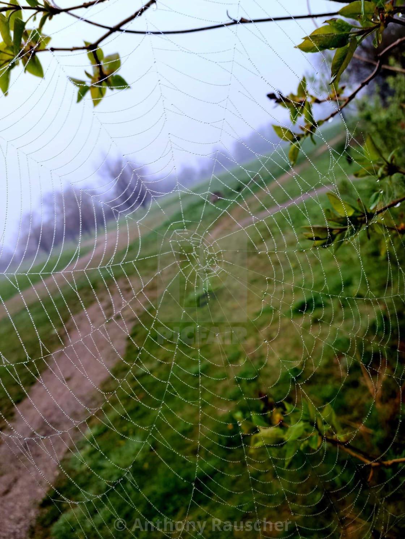 """""""Rainyday Spiderweb"""" stock image"""
