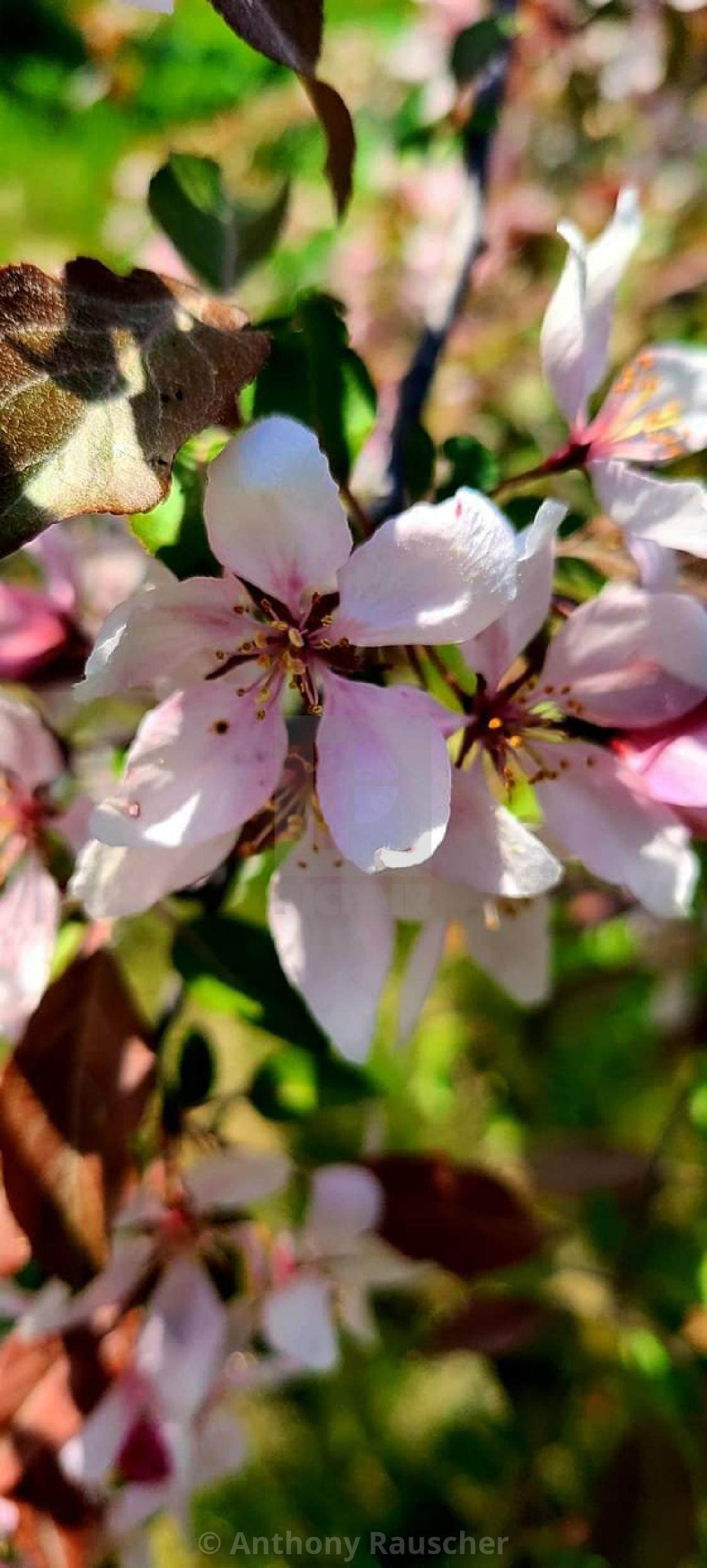 """Pretty Flowers"" stock image"