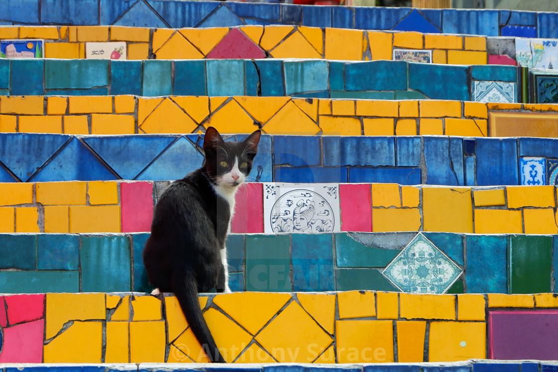 """""""Kitten on the Escadaria Selarón"""" stock image"""