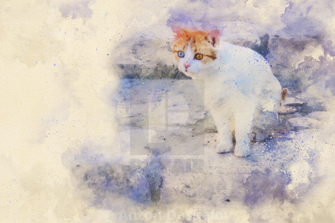 """""""Watercolor image of a white cat with different eye color, on stairs in the European Capital of Culture Matera, Italy"""" stock image"""
