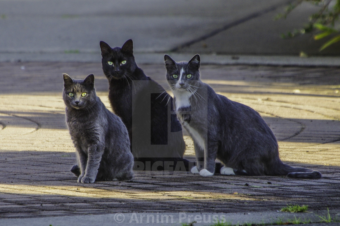 """Campbell River Harbour Cats"" stock image"