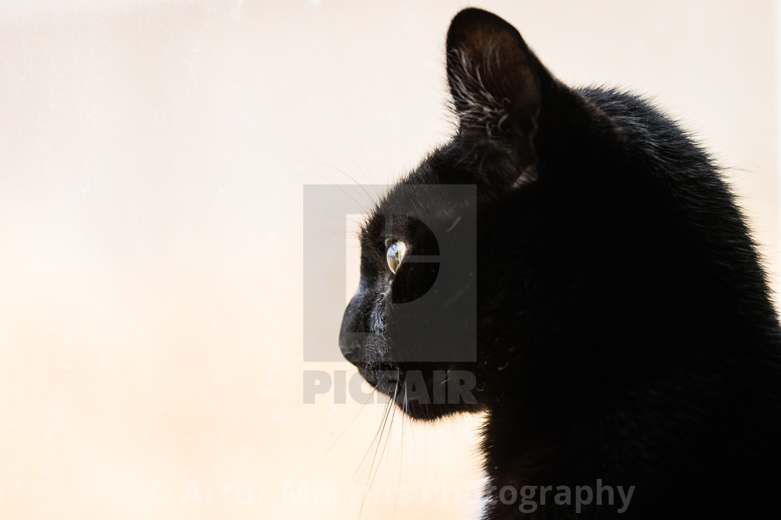 """Black cat looking out the window"" stock image"
