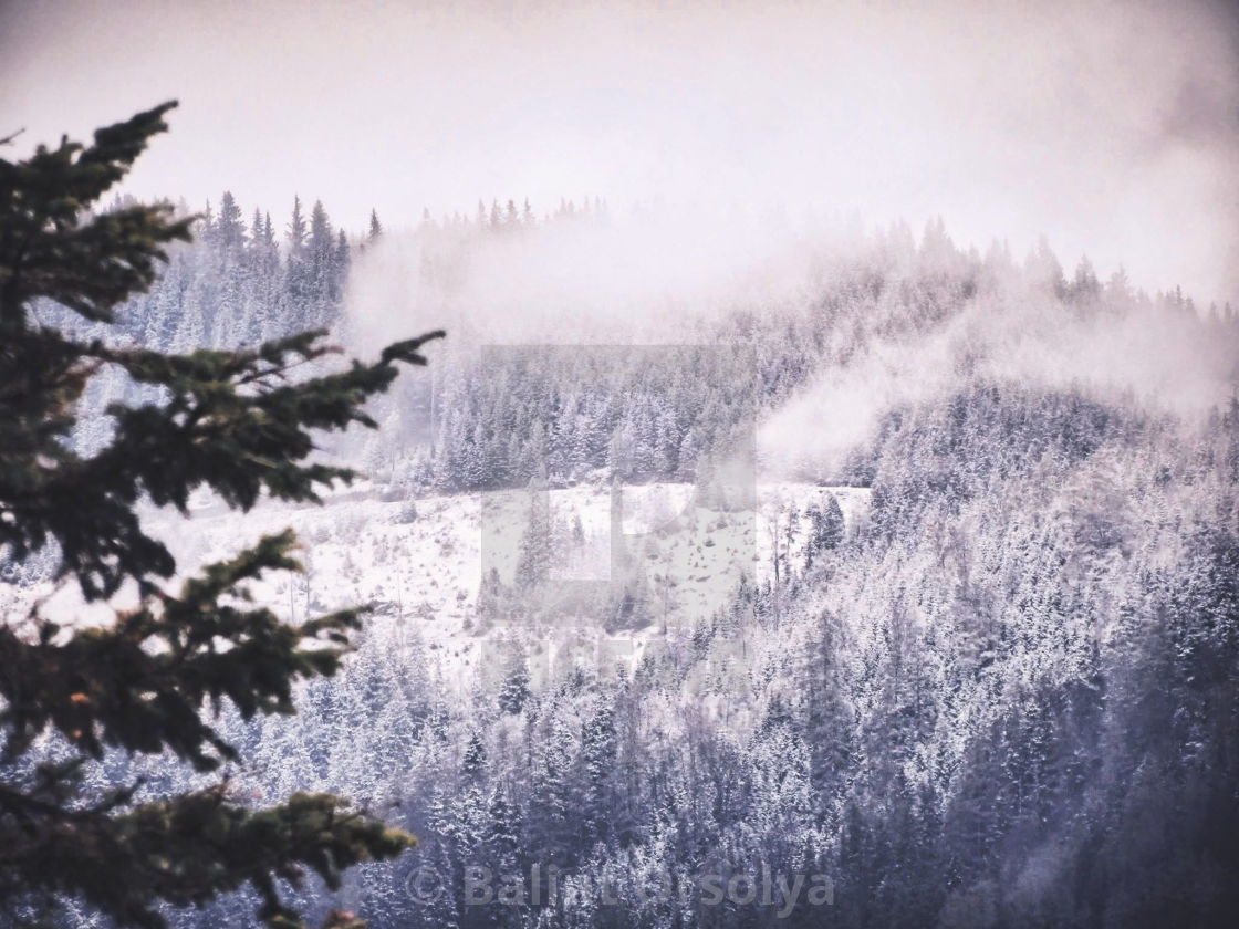 """""""Snow over forest"""" stock image"""