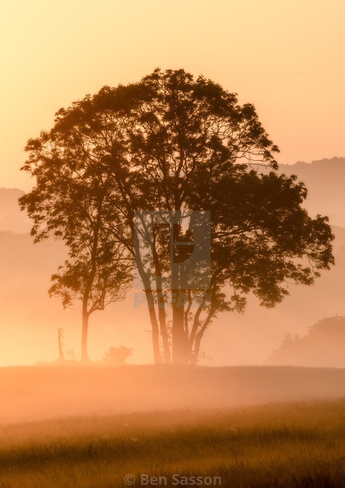 """""""Tree silhouette on a misty dawn"""" stock image"""