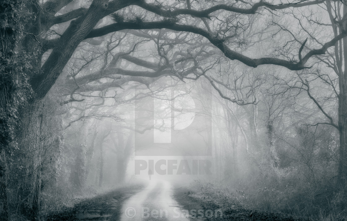"""""""Human figure and bare trees on a foggy day"""" stock image"""