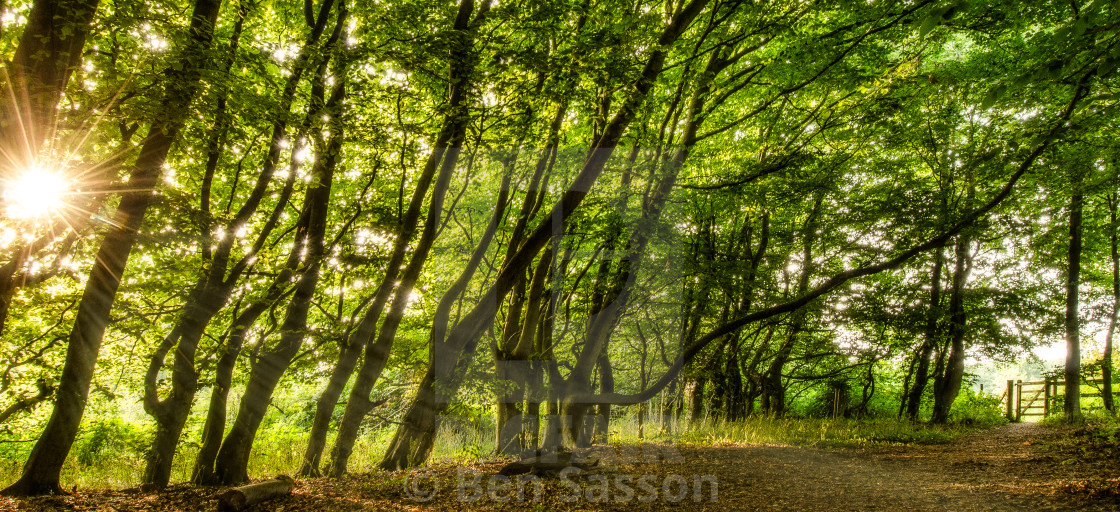 """""""Afternoon at Lepe Country Park bird sanctuary"""" stock image"""