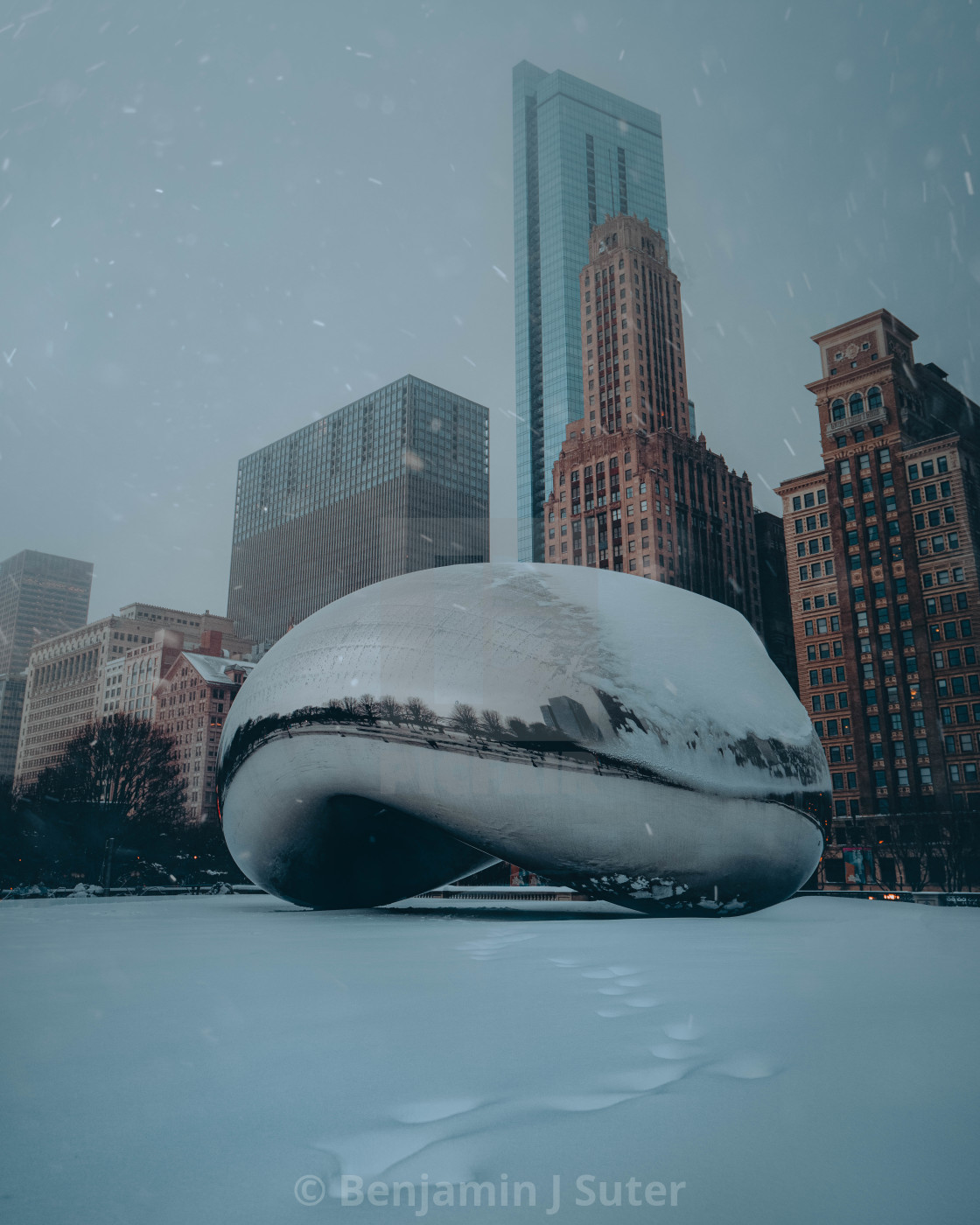 """A Snowy Bean"" stock image"