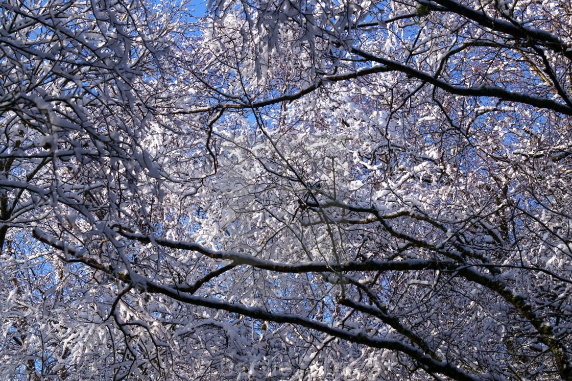 """Snow Branch"" stock image"
