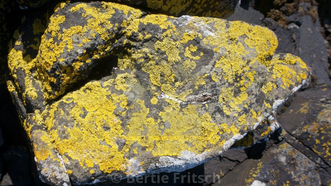 """Lichen-rock"" stock image"