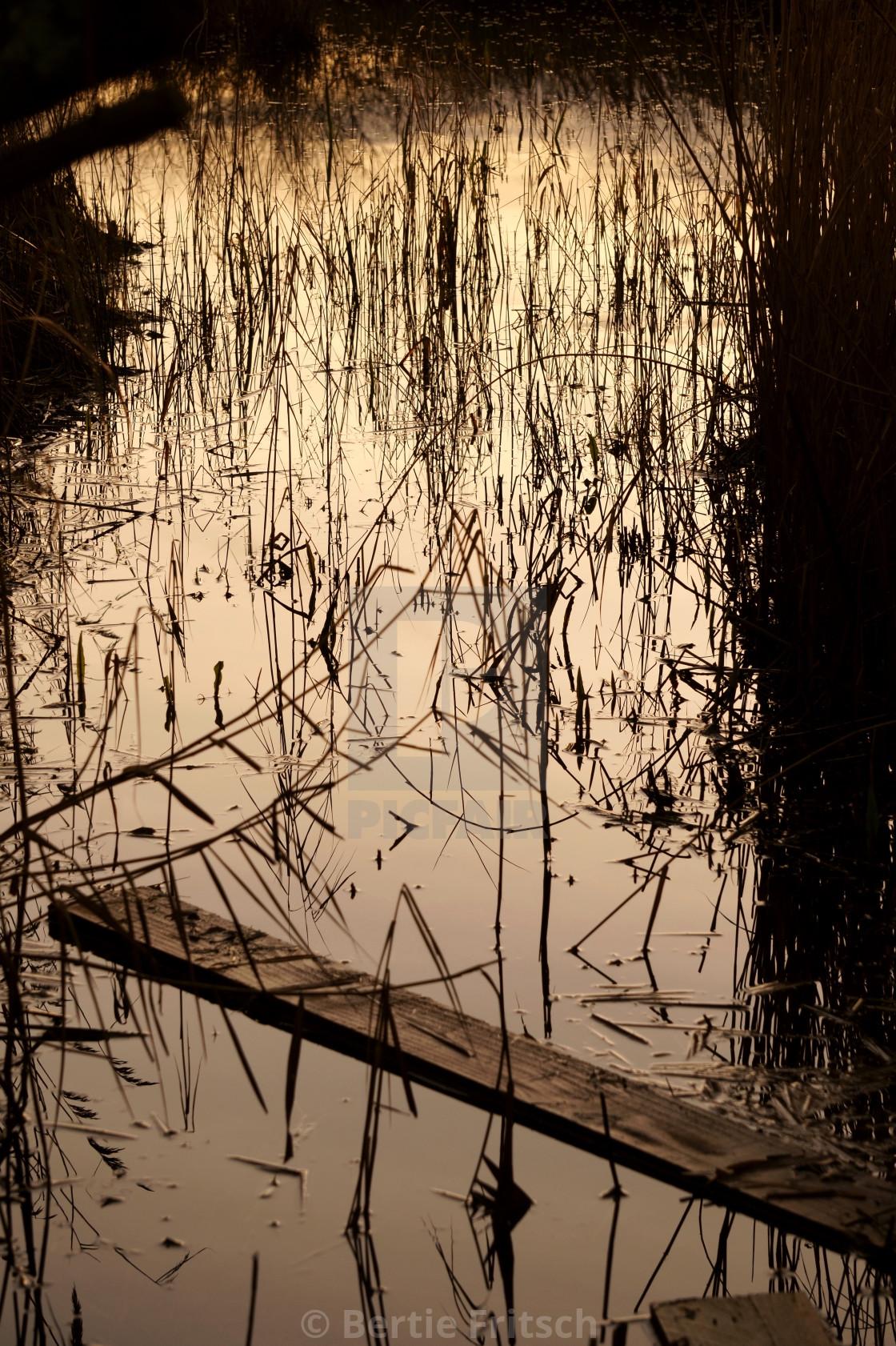 """Reeds at Dusk"" stock image"