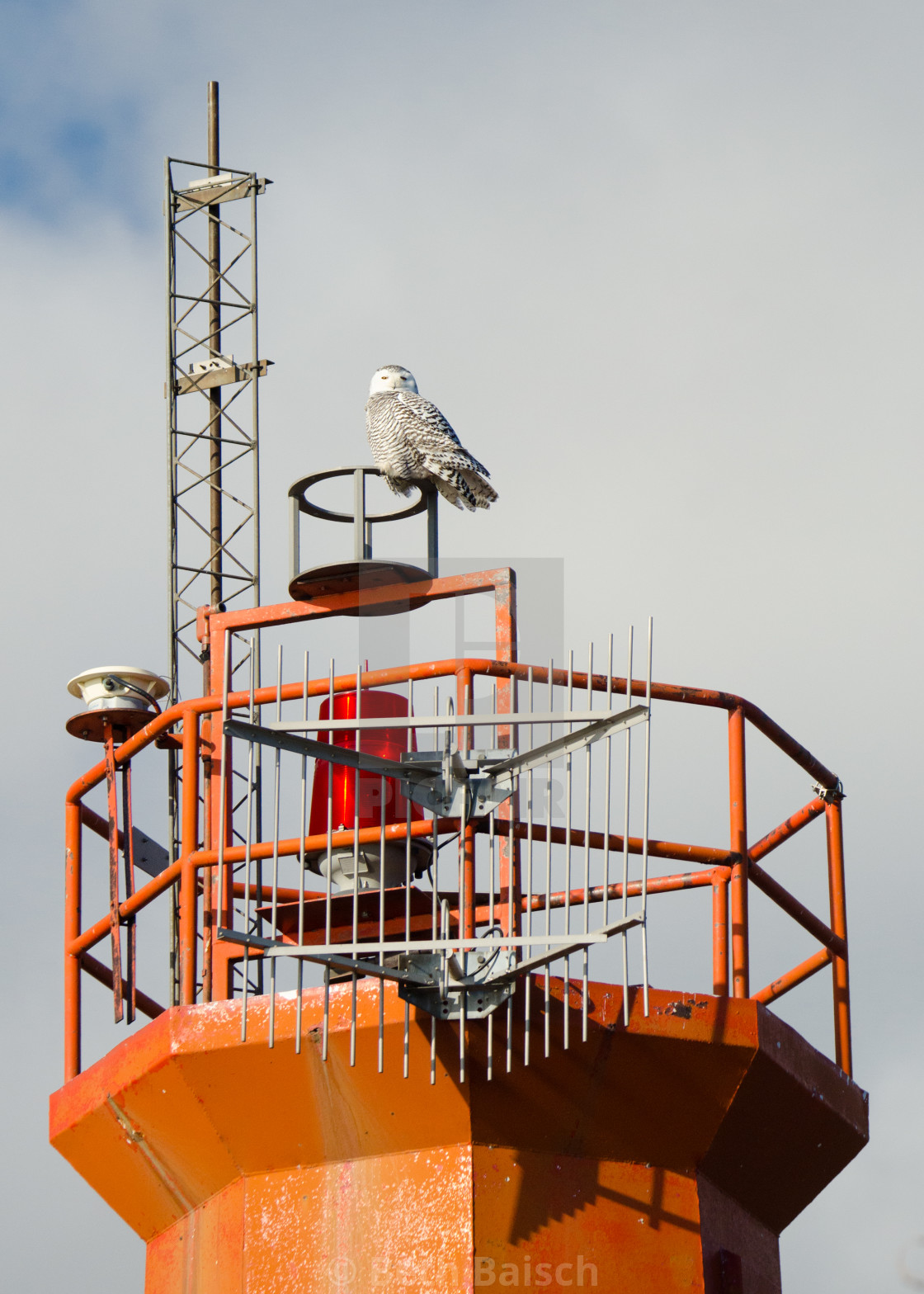 """""""Snowy Owl Perched Atop Toronto Harbour Light"""" stock image"""