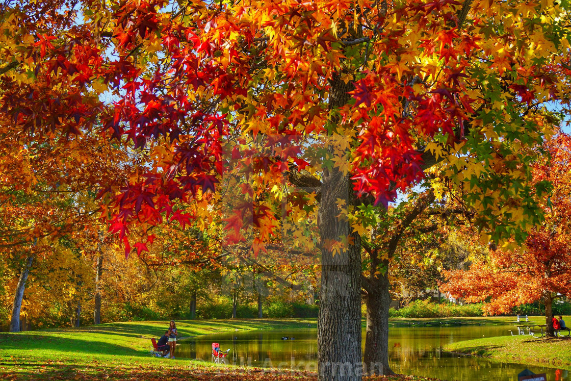 """""""Afternoon at the Park"""" stock image"""