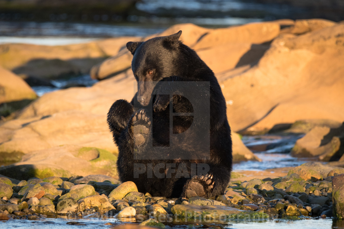 """Silly Ol' Bear"" stock image"