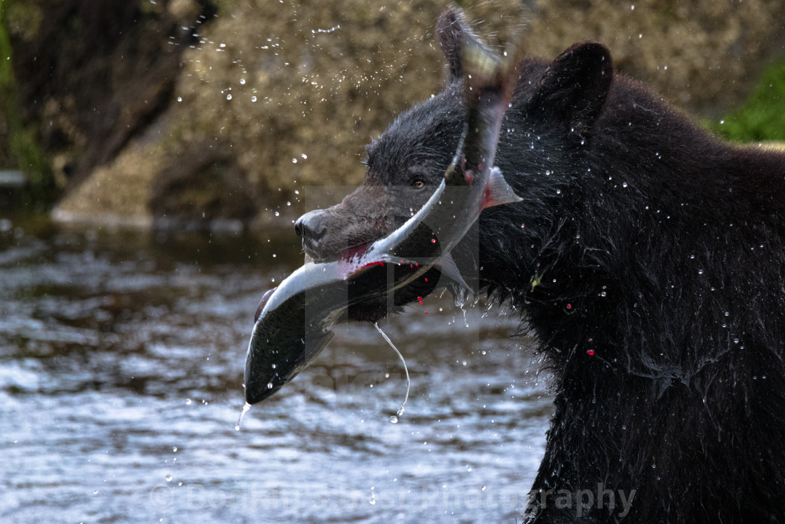 """""""Catch Of The Day"""" stock image"""